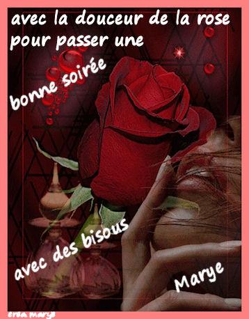 douceur de la rose